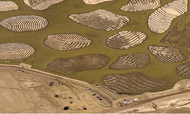 California photographer captures man-made 'leaves' at Owens Lake in Inyo County