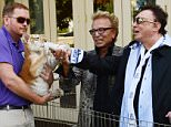 LAS VEGAS, NV - OCTOBER 22:  Siegfried Fischbacher and Roy Horn celebrate SARMOTI Cubs day with Make-A-Wish Foundation at The Mirage Hotel & Casino  on October 22, 2015 in Las Vegas, Nevada.  (Photo by Denise Truscello/WireImage)