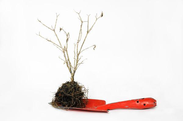 eec78f - Какие деревья и почему лучше сажать осенью?