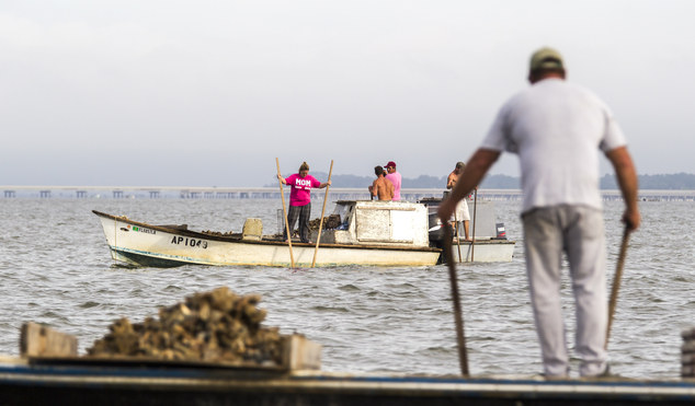 In this Thursday, April 2, 2015 photo, Mandy Langley, left, gathers oysters with baskets attached to 14-foot handles called tongs in Apalachicola Bay near Ea...