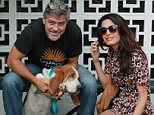 San Gabriel Valley Humane Society ADOPTED! Millie was adopted by George Clooney and his wife Amal!! Millie, a bassett hound, now has a new brother named Louie who is also a rescue! Congratulations and thank you for adopting!!