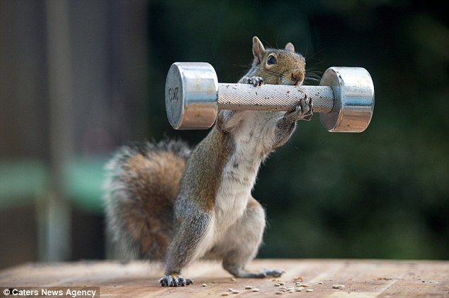 The squirrels appear to be working out thanks to a clever feeding device and the thin fishing line