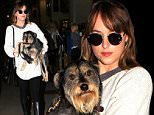 Dakota Johnson was dressed casual for her flight into LAX.  The rising star was accompanied by her little dog, in a white top and black pants, with knee-high boots,  on Friday, November 6, 2015  X17online.com