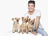 Simon Cowell and a team of celebrities, including violinist Vanessa-Mae, comedian and author Julian Clary, and actors Michael Fox (Downton Abbey) and Eleanor Matsuura (Cuffs) have been photographed with their companion dogs by world renowned portrait photographer, Rankin, to mark the launch of a global campaign by Cruelty Free International to end the use of dogs in experiments. Simon was joined by Squiddly, Diddly and Freddie in Rankinís London studio for the photo shoot to tell the world that dogs do not belong in laboratories. In support of the campaign, Simon said, ìI have always loved dogs but had no idea how much happiness they would bring to my life. Squiddly, Diddly and, now, Freddie are hugely important members of my family - and even the thought of any dog being mistreated sickens me. Thatís why Iím supporting Cruelty Free International - to stop dogs being used for experiments in laboratories around the world. No dog should be treated in such a way. After all, they are maní