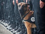 French police dog twitter pic