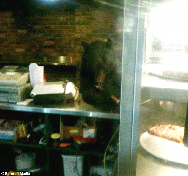 Self-service: The grown black bear leans on the counter as he swipes the pizzas from Fat Tony's in Whistler, Canada