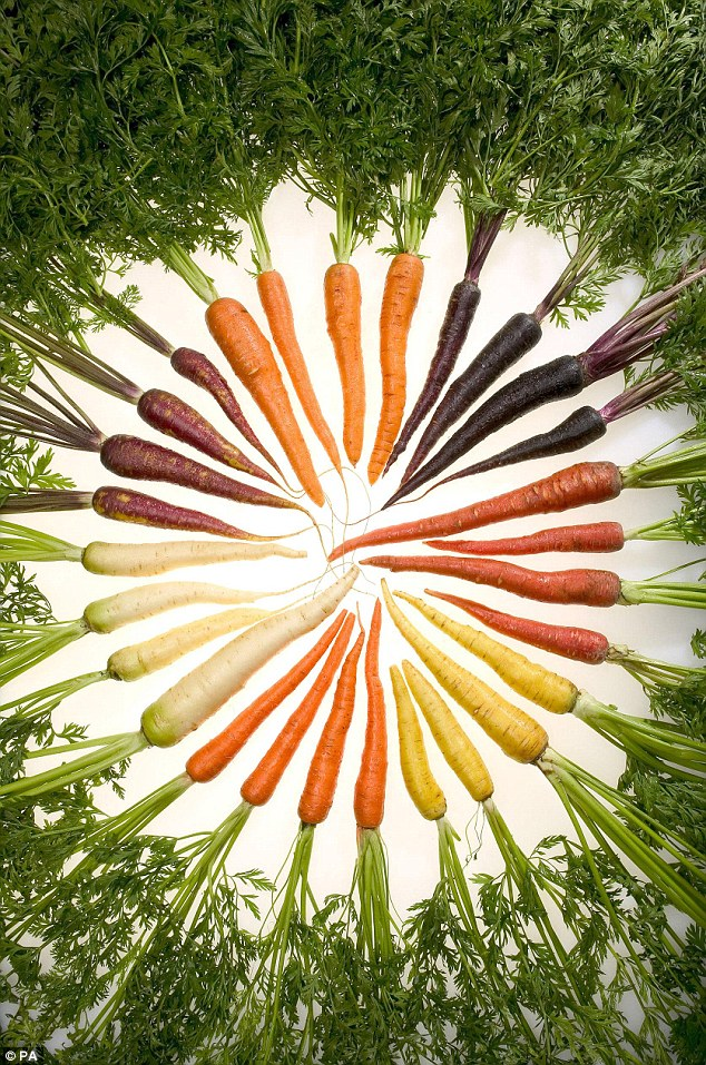 Rainbow roots: Multi-coloured carrots, grown naturally in Norfolk, will go on sale at Tesco stores across the UK