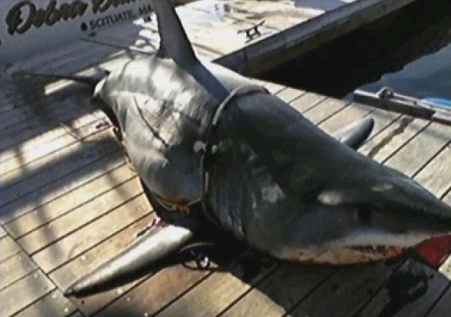 Huge: Karen Ulanowski's catch drew in crowds to see and touch the shark