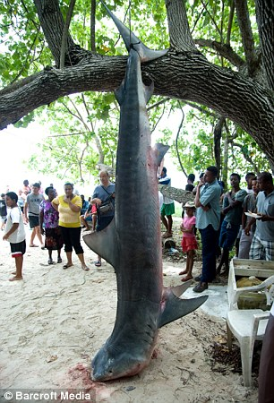 Hunters killed a shark which may have attacked Mr Redmond and hung it from a tree
