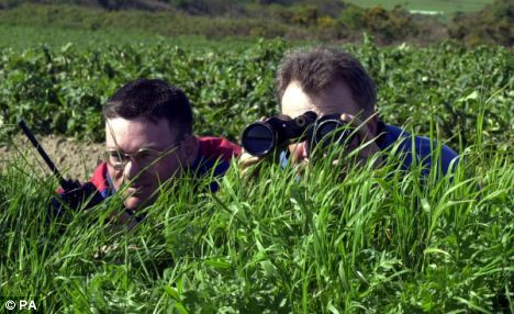 No joke: Potato growers Paul le Bihan, and Mike Labey set up a watch to protect their crop