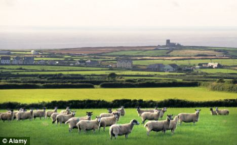 Wide open: Sheep farming in open country like this near Tintagel in Cornwall is difficult to secure from thieves