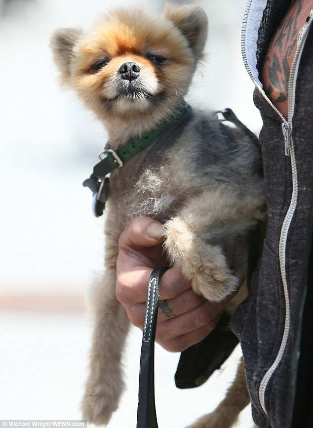 It's a dog's life: Not every animal can boast they get to go on outings to swanky Beverly Hills restaurants