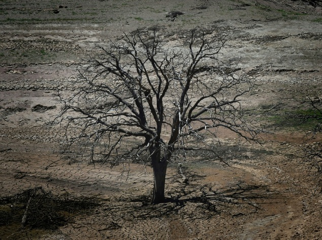 A dead tree is seen on a dried section of the New Melones reservoir which is now at less than 20 percent capacity as a severe drought continues to affect Cal...