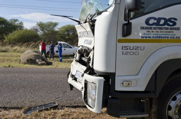 Dent: The truck was damaged after smacking into an endangered white rhino. The driver was unhurt