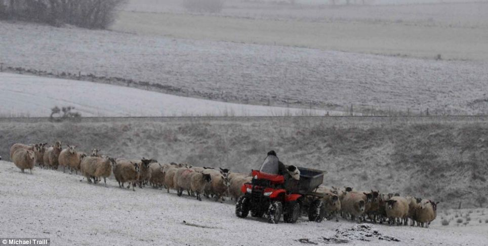 In a marked contrast to last week, snow fell across a large part of Aberdeenshire. Here a farmer is seen feeding his sheep in Huntly earlier today after a fresh blanket of snow