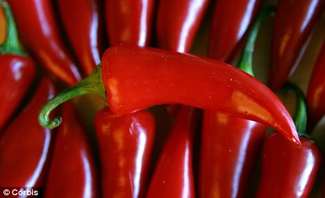 Red jalapeno peppers are rich in capsaicin. Scientists are using the heat-generating ingredient in experimental weight-loss surgery