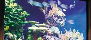 A club in New York called the Coral Room's, where the main attraction is a 9,000-gallon, wall-to-wall and floor-to-ceiling fish tank.