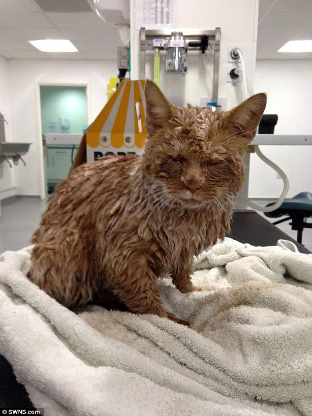 Blinded: The ginger tom, discovered huddled on a doorstep in Bristol, was so covered in concrete that it couldn't even open its eyes
