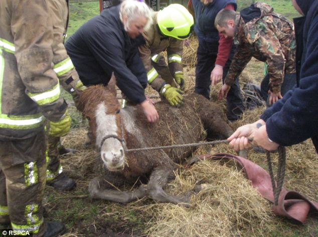 This horse in Basildon was unable to stand due to malnutrition when the RSPCA rescue team found her