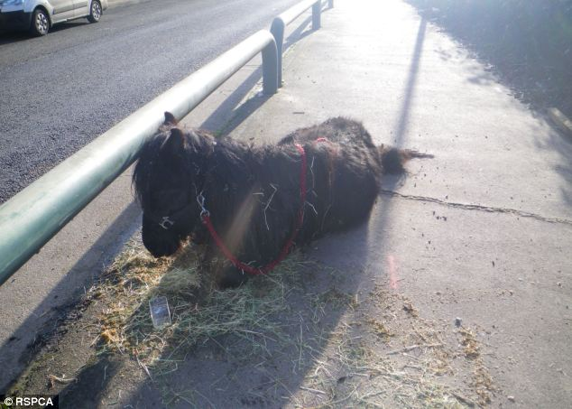 Saved: A pony left by the side of the road in South East London - the second found in just one week