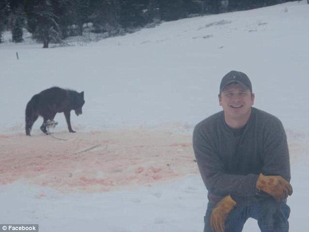 Stoking controversy: Animal rights group Footloose Montana says it was targeted because it had criticised and widely circulated this snapshot of a smiling trapper posed with a dying wolf