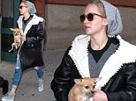 Mandatory Credit: Photo by Startraks Photo/REX Shutterstock (5435793d)\n Jennifer Lawrence with Dog Pippi\n Jennifer Lawrence out and about, New York, America - 25 Nov 2015\n Jennifer Lawrence Leaving Harvey Weistein Offices with Dog Pippi\n
