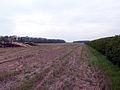 Near Red House Farm - geograph.org.uk - 165046.jpg
