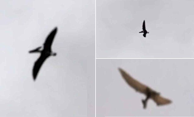 Video appears to capture a Pterosaur surveying the sky over Ohio