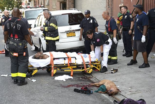Brooklyn homeless man nearly mauled to death by pit bull until officer saves him