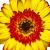 Profile image for cecilhenry