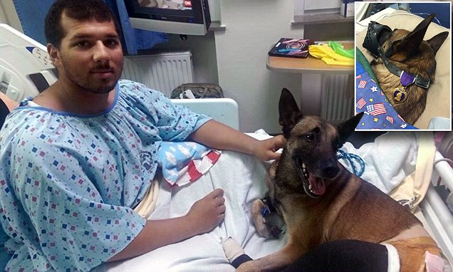 Military police officer, dog wounded by IED in Afghanistan