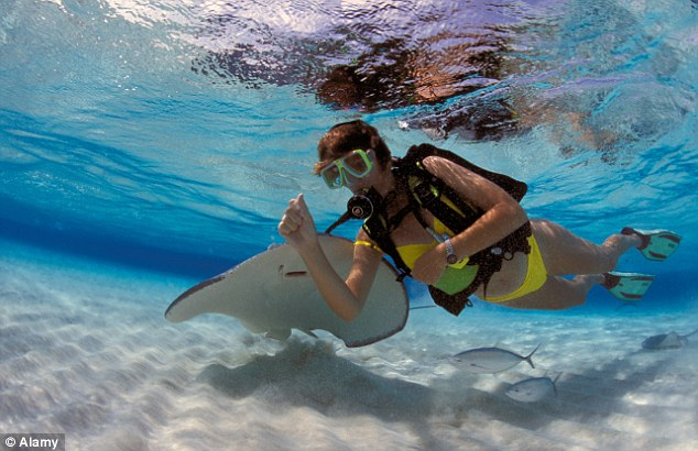 Rays of light: Sophie encountered local wildlife at Stingray City - though not all her children were impressed