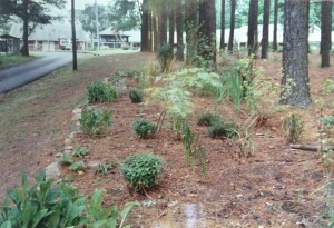 A Scenic Forest Trail at the Burkeville Lodge