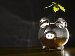 A stock photo of a piggy bank with plant growing inside.   Image by © Roy Botterell/Corbis