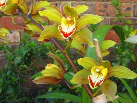 orchid 1:
