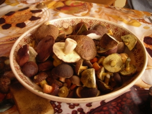 forest mushrooms: