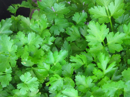 parsley 2011: