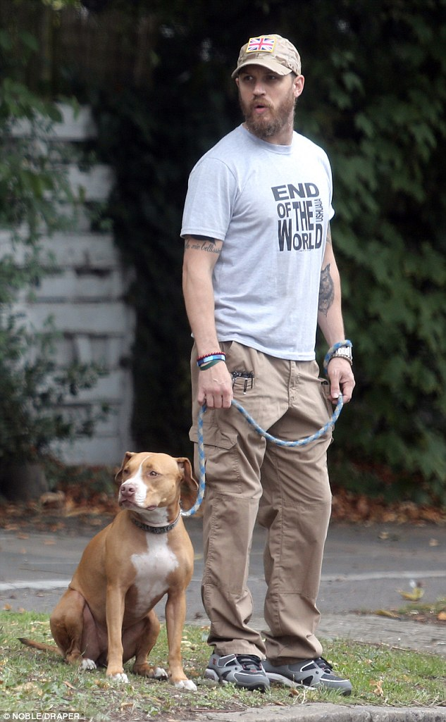 Puppy love: Bearded actor, Tom Hardy, was seen out and about walking his pet pooch Cass around West London last week
