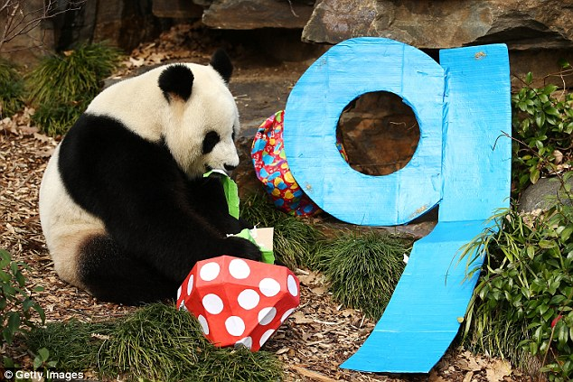 Huge crowds came to Adelaide zoo over the weekend to celebrate Fu Ni's ninth birthday