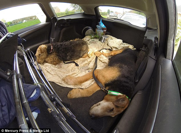 Four's a crowd: Mr Russell makes do with sleeping in the passenger seat while the dogs stretch out in the back, but he complained the car is beginning to smell
