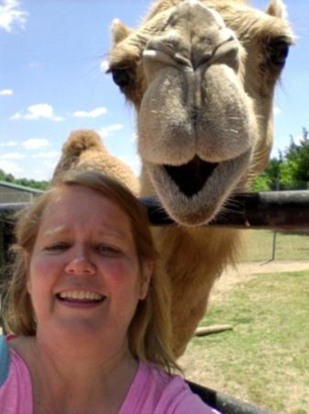 Smile please: A laughing camel joins in this happy snap — to prove he hasn't got the hump