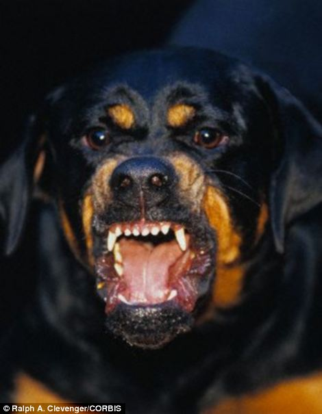 Rotweillers are popularly known to make good and sometimes ferocious guard dogs
