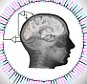 Scientists decode brain signals nearly at speed of perception  Electrodes in patients? temporal lobes carry information that, when analyzed, enables scientists to predict what object patients are seeing