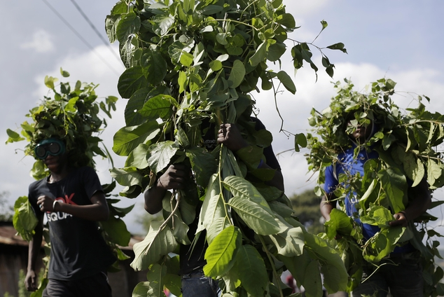Demonstrators seem to be dressed as trees as they walk to a barricade in the Musaga district of Bujumbura, Burundi, Wednesday May 6, 2015.  On Tuesday some p...