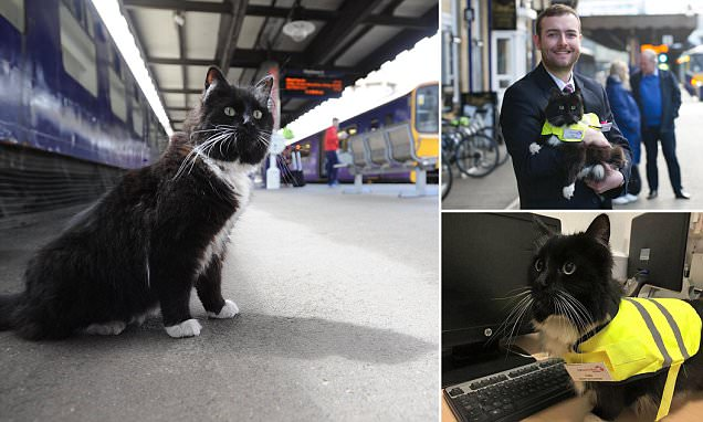 Huddersfield train station's cat Felix is promoted to Senior Pest Controller