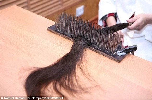 A technician gently pulls a strand of donated hair through a brush, smoothing it before it is treated