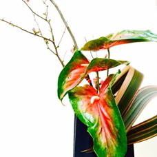 'The #weeklyikebana is here again frontin' a fantastic display of flax, quince and anthurium. Can you say pop of color candy?  Designed by Laura Brainin-Rodriguez and Dorcas Walton of the Asian Art Museum Flower Committee.'