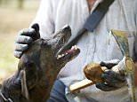 MOS TRAVEL..TRUFFLE HUNTING..MR JAUMARD AND TRUFFLE DOG...CLB3.0650_1400x2100_300_RGB.jpg