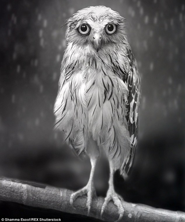 Shamma Esoof's picture won a photography prize and became an internet sensation after it was labelled the 'world's saddest owl'
