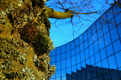 Materials - moss on a tree with a black glass building in the background